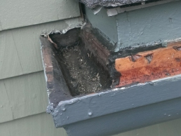 Fascia Repair on house