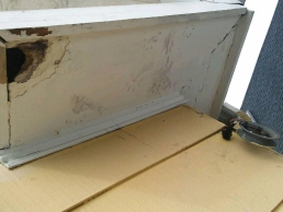 Squirrel Removal and Repairs to gutters