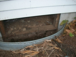 Skunk Removal and Exclusion from crawlspace