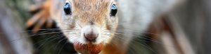 squirrel removal tewsbury, ma