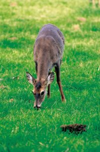 Deer Control, Removal, and Prevention 1