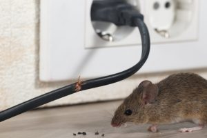 wildlife removal critter control of woburn