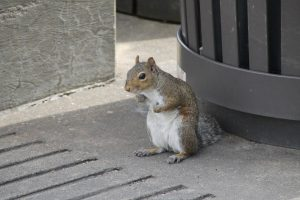 Gray Squirrel Services 1